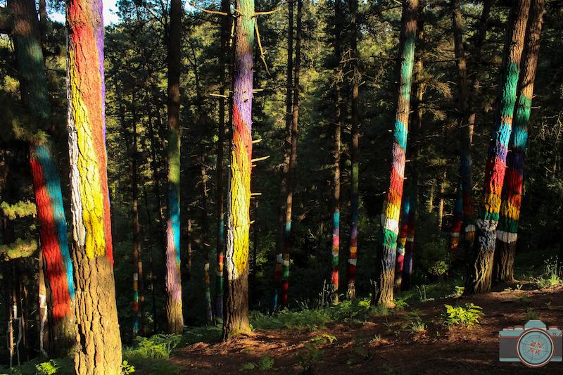 bosque oma bizkaia