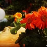 Girona Temps de Flors en imágenes
