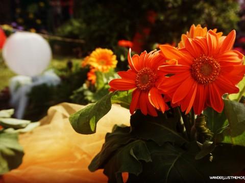 flors naranja