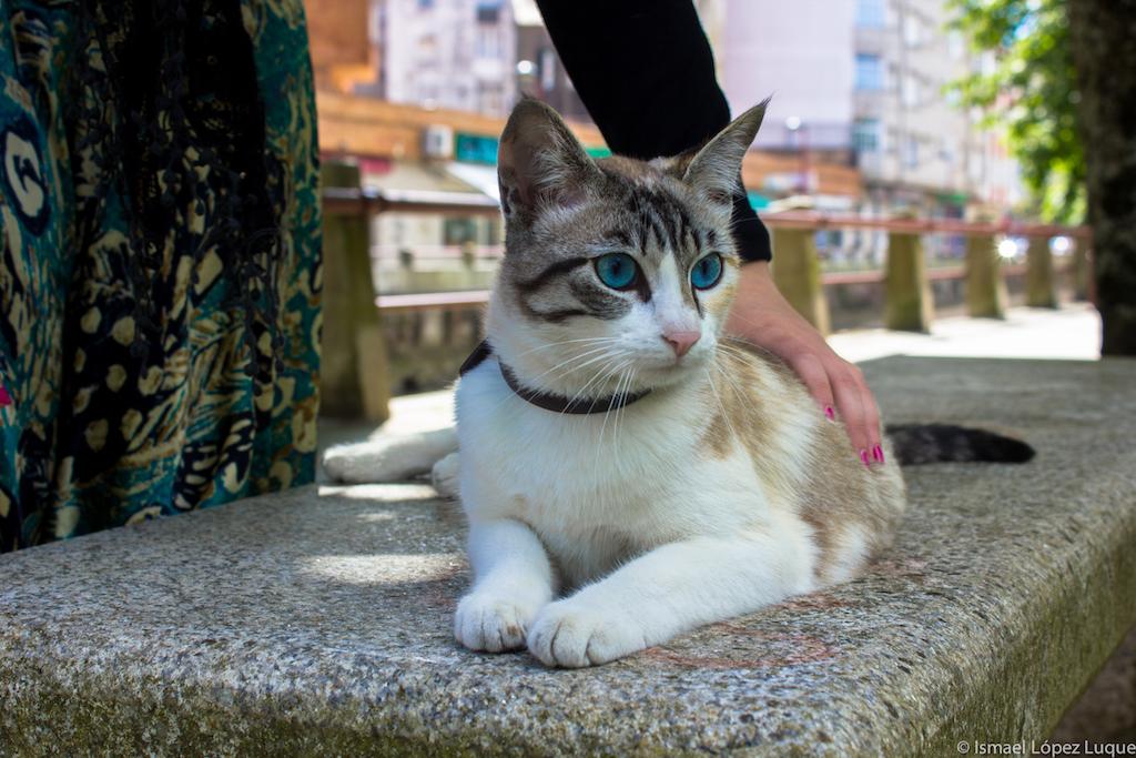 vilagarcia gato-2