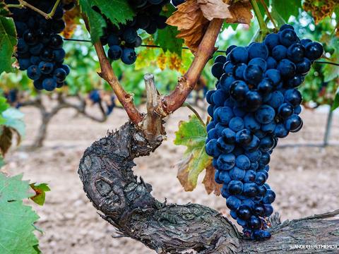 La Rioja Wanderlust Memories