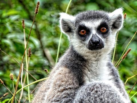 Madagascar Wanderlust Memories