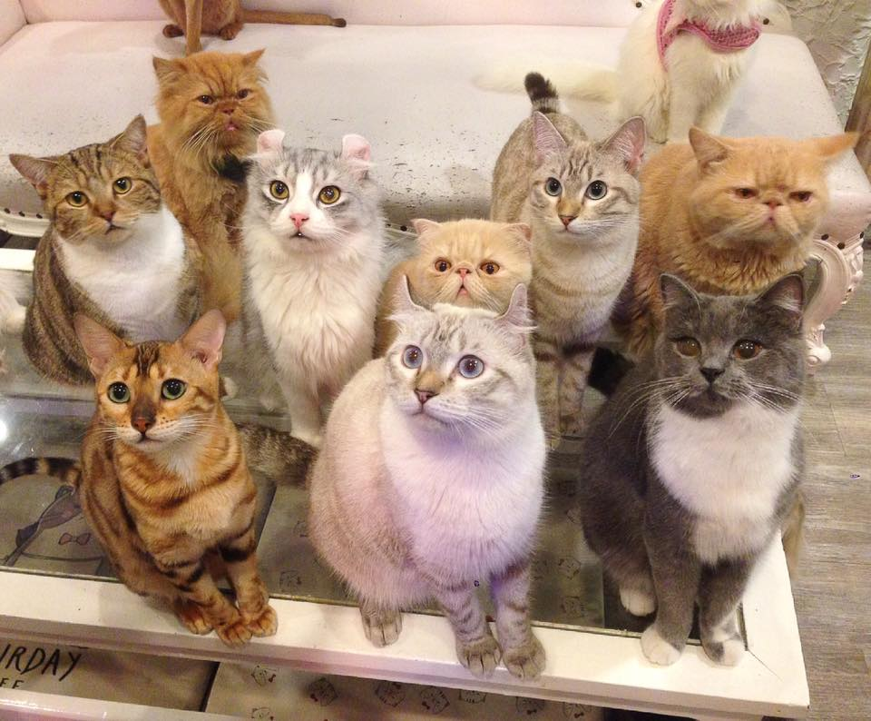 cat-cafe-gatos