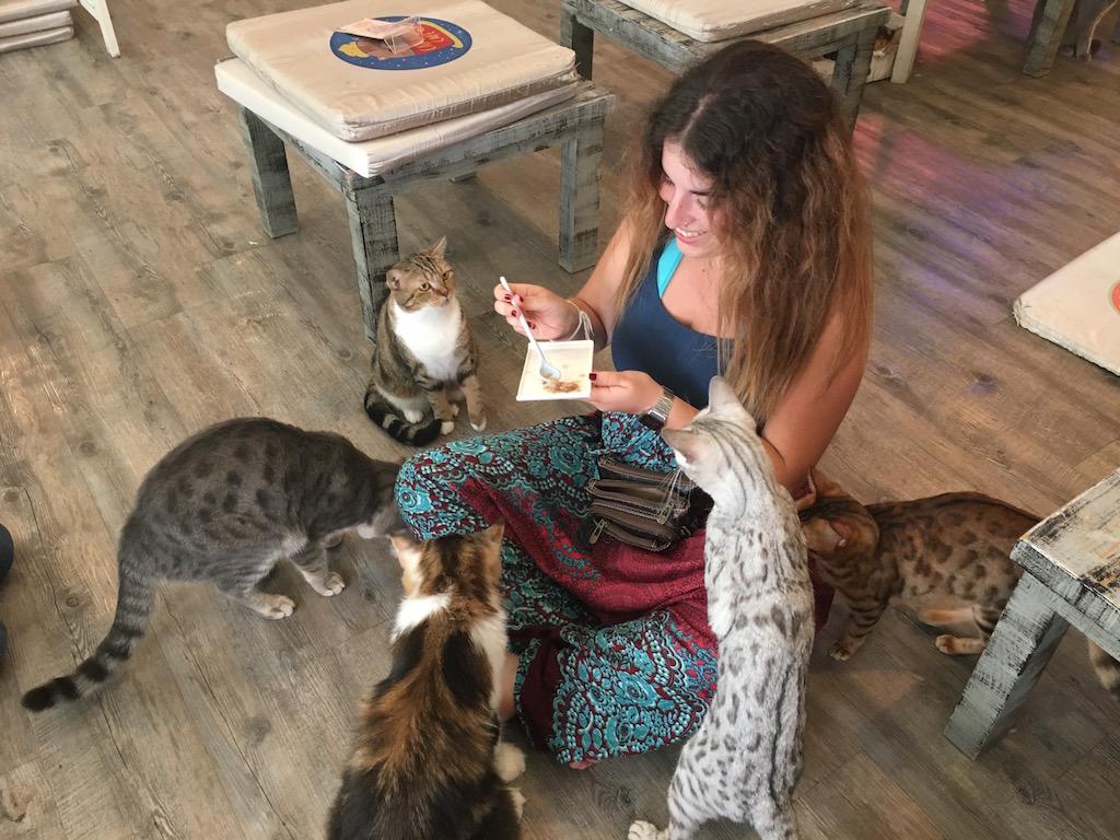 cat-cafe-tailandia