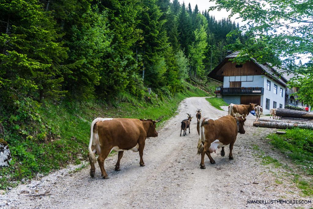 Eslovenia-11_Wanderlust_Memories