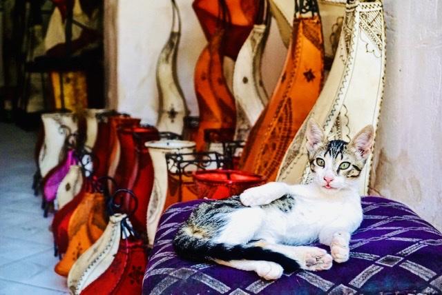 Gatos en marrakech